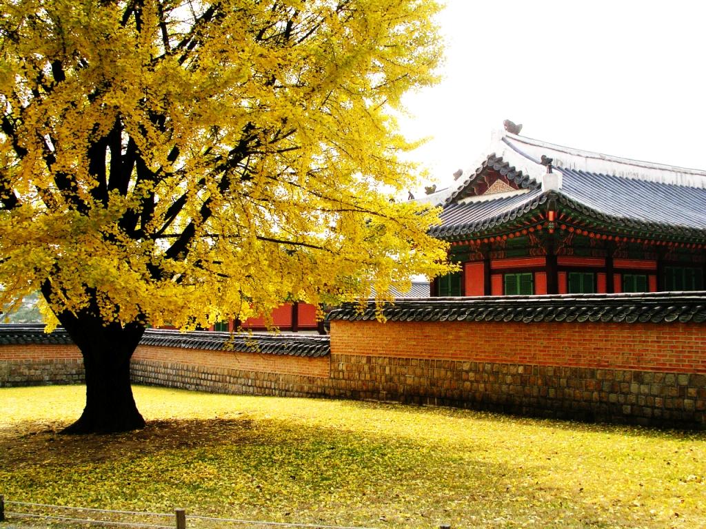 Thông tin cần thiết khi đi du lịch Hàn Quóc